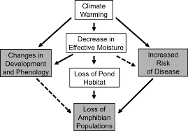 Flow Chart Of Causes Of Global Warming Flow Chart Of Pond Ecosystem Diagram Nationalphlebotomycollege
