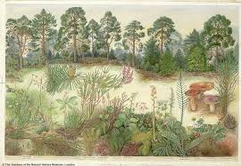 Barbara Nicholson (1906-1978) commissioned by the @NHM_London in the 1970s  for educational posters. Her Scottish pine f… | Nature inspiration, Nature  images, Nature