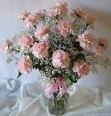 phi mu 24 pink carnations arrangement
