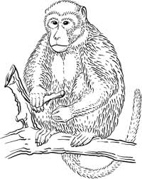 Small Picture Jungle Coloring Pages Monkey Chess and Patterns