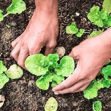 8 vegetables you should start indoors
