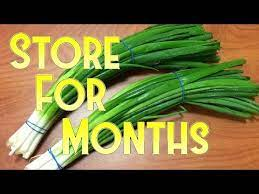 how to spring onion for months