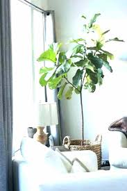 good indoor plants 6 house plants that clean your air good indoor good indoor plants tall indoor plants low light that need sunlight large for good