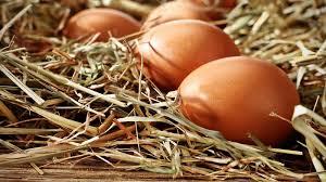 Eier wirklich so schädlich?