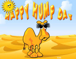 Happy Hump Day Quotes Cool Happy Hump Day Quote With Camel Pictures Photos And Images For