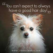 Dog Quotes Inspirational Magnificent Not A Good Hair Day Inspirational Quote