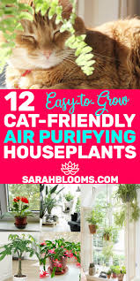 best air purifying houseplants that are super easy to grow houseplants petsafe airpurifying