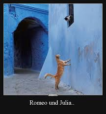 Romeo Und Julia Lustige Bilder Sprüche Witze Echt Lustig My