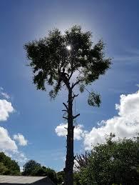 robu0027s tree service pic 6 robs tree service41