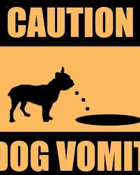 causes of my dog vomiting bile