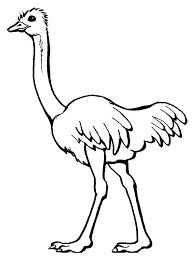 Small Picture Ostrich coloring pages Download and print Ostrich coloring pages