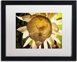 "Amazon|Trademark Fine Art She Only Comes Out at night by Kurt Shaffer  Artwork 16 by 20"" マルチカラー KS01087-B1620MF|アートフレーム・ポスター オンライン通販"