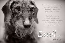 Zitate Abschied Hund Leben Zitate