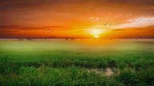 green field, sunset, nature, landscape ...