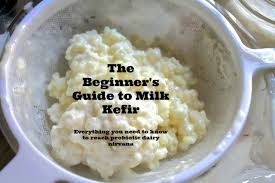 kefir. milk kefir grains in a strainer label