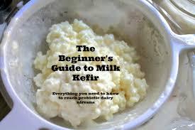 kefir milk. milk kefir grains in a strainer label