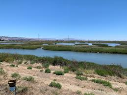 Tracking Carbon Stored In Revived Bay Area Salt Marshes
