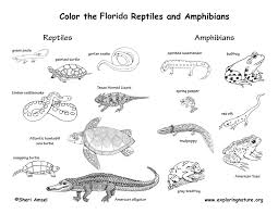 Small Picture Florida Animals Habitats Activities Symbols Exploring Nature