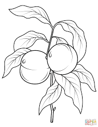 Small Picture Peach Tree Branch coloring page Free Printable Coloring Pages