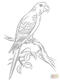 jamaican red macaw coloring page from macaw select from 30443 printable crafts of cartoons nature any more