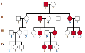 A Pedigree Is A Chart That Shows Solved The Pedigree Chart Below Shows A Family With Sever