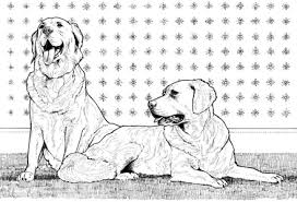 Small Picture Attractive Design Ideas Labradoodle Animal Coloring Pages Labrador
