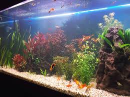 Aquarium Design For Flowerhorn Feng Shui Aquarium Placement And Design Lovetoknow