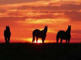 essay topics on all the pretty horses all the pretty horses essays