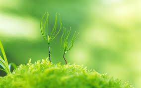 Green Nature Plants Macro Depth ...