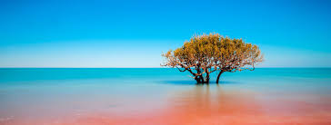 Study Abroad in Australia | Study in Australia - StudyAbroad.com