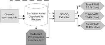 Dispersed Air Flotation Of Chlorella Saccharophila And