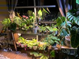 Growing Orchids Under Led Lights Here But Not Here_butnot Twitter