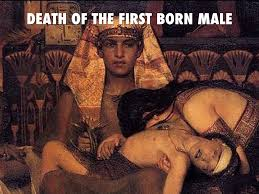 Image result for death of the firstborn