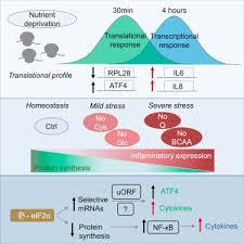 Translation Vs Transcription Venn Diagram Nutrient Deprivation Elicits A Transcriptional And