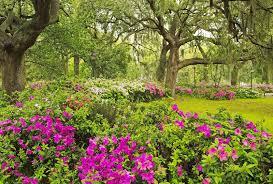 forsyth park savannah georgia flowers garden wallpaper