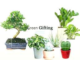 order plants online. House Plants Online Nursery Order Houseplants Corporate Gift .