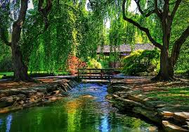 backyard japanese zen garden
