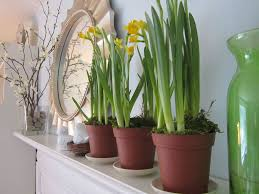 Decorations:Amazing Indoor Houseplants On White Fireplace Mantel Decor Also  Small Potted Plants And Round