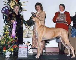 Great Dane Size Chart Growth Rate Great Danes Growth Chart Greatdanelady Com