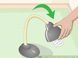 image titled create an egg incubator for wild bird eggs step 4