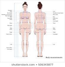 Woman Body Diagram Photos 4 744 Woman Body Stock Image