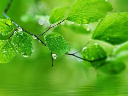 Green nature HD Wallpaper For PC ...