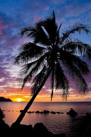 Iphone 5 hd wallpaper hd for your cellphone palm tree sunset. Palm Tree Sunset Wallpaper Iphone Nosirix