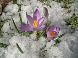 Ответы mail ru Помогите написать сочинение на тему Картинки весны  Весна наступает Снег темнеет и тает Сосульки плачут от солнца На дорогах лужи блестят Воробьи собираются стайками чирикают поют песню весне