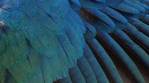 Download Wallpaper 2048x1152 Feathers ...