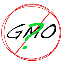 gmo essay genetically modified food student writing lesson by jing  anti gmo essays studies proving gmos are harmful not if science matters