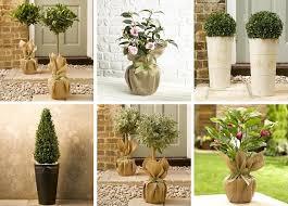 marks spencer mail order outdoor plants