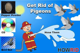 get rid of the pigeons 14 home