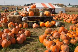 Image result for fall festival pics