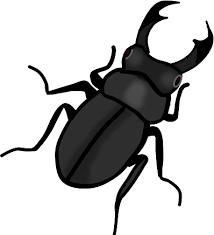 夏の昆虫クワガタのイラスト